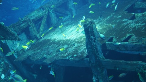 シー・アクアリウム 沈没船